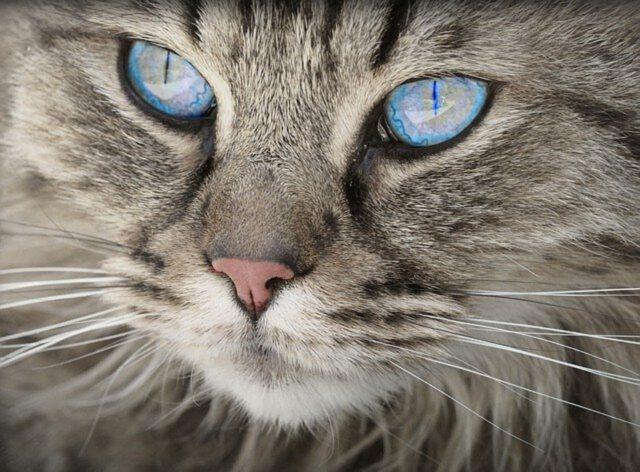 tresowanie kotów